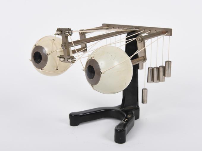 可動性眼球模型