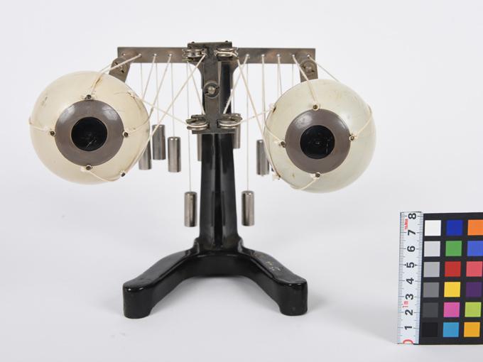 可動性眼球模型2