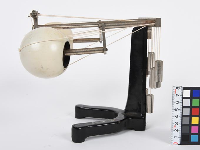 可動性眼球模型3