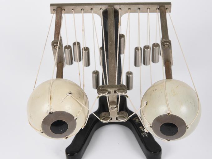 可動性眼球模型6