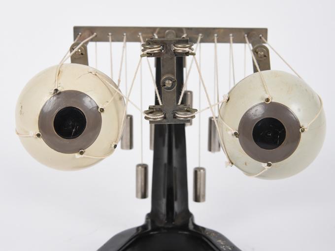 可動性眼球模型7