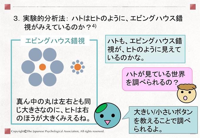 [3.実験的分析法: ハトはヒトのように、エビングハウス錯視がみえているのか?]エビングハウス錯視:真ん中の丸は左右とも同じ大きさなのに、ヒトは右のほうが大きくみえるね。 ハトも、エビングハウス錯視が、ヒトのように見えているのかな。 ハトが見ている世界を調べられるの? 大きい/小さいボタンを教えることで調べられるよ。