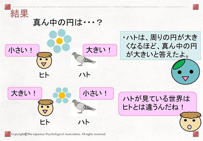 [結果]ハトは、周りの円が大きくなるほど、真ん中の円が大きいと答えたよ。 ハトが見ている世界はヒトとは違うんだね!
