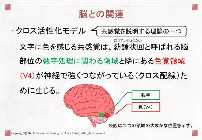 [脳との関連]クロス活性化モデル 文字に色を感じる共感覚は、紡錘状回と呼ばれる脳部位の数字処理に関わる領域と隣にある色覚領域(V4)が神経で強くつながっている(クロス配線)ために生じる。