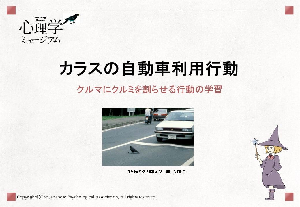 カラスの自動車利用行動(クルマにクルミを割らせる行動の学習)1