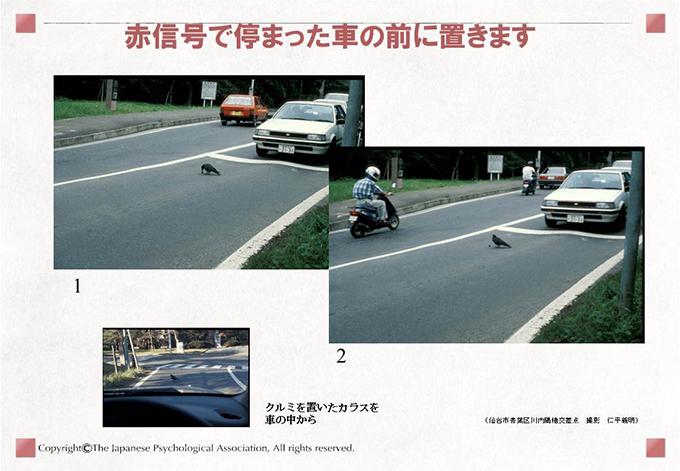 カラスの自動車利用行動(クルマにクルミを割らせる行動の学習)9
