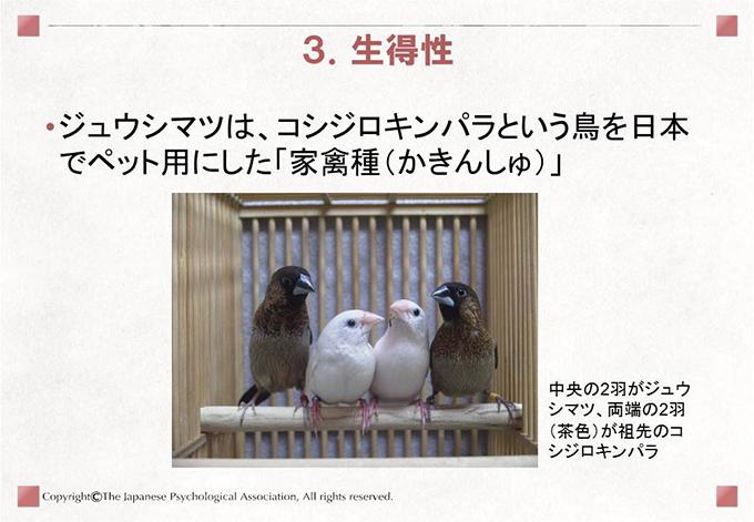 小鳥の歌学習7