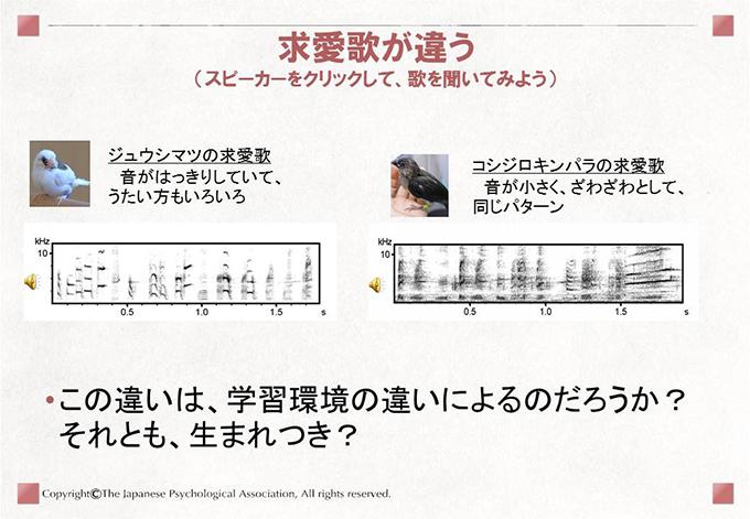 小鳥の歌学習8
